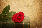 Rose on book in vintage style — Stock Photo