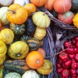Autumn colorful pumpkins — Stock Photo