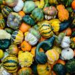 Pumpkins background — Stock Photo #13568775