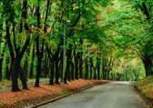 Autumn forest and empty road — Stock Photo