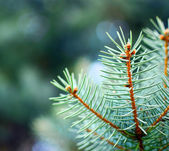 Christmas tree macro — Stock Photo