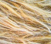 Blonde hair texture — Stock Photo