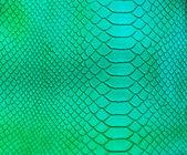Crocodile skin pattern — Stock Photo
