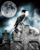 Crow sitting on a gravestone in moonlight at cemetery — Stock Photo