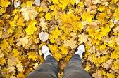 Spacery w lesie jesienią — Zdjęcie stockowe