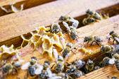Working bee — Stock Photo