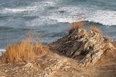 Sea and coast view — Stock Photo
