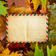 Maple leaves with blank postcard — Stock Photo #14548059