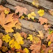 Stock Photo: Autumn leaves on wood floor background