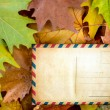 Blank postcard on autumn leaves — Stock Photo