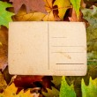 Empty vintage postcard against autumn leaves — Stock Photo