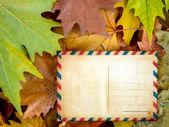 Blank postcard on autumn leaves — Stock Photo