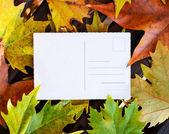 Arka plan boş kartpostal Sonbaharda akçaağaç yaprakları — Stok fotoğraf