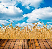 Wheat field and blue sky above wood floor — Stock Photo