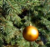 Golden bauble ornament on Chrtistmas tree closeup — Stock Photo