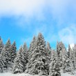 Beautiful winter forest landscape — Foto de Stock