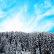 Beautiful winter forest landscape — Stock Photo #16881493