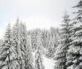 Winter landscape — ストック写真