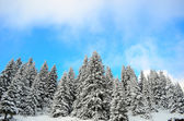 Beautiful winter forest landscape — Foto Stock