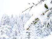 Concepto de invierno — Foto de Stock