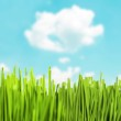 Green grass against beautiful blue sky — Stock Photo