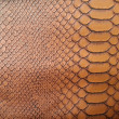 Brown snake skin texture — Stock Photo