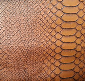 Brown snake skin texture — Stock Photo