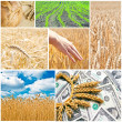 Agriculture collage - Stockfoto