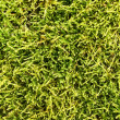 Stock Photo: Moss background