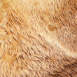 Stock Photo: Bear fur texture