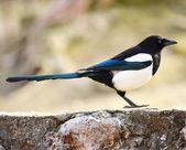 Bird portrait — Stock Photo