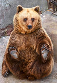 Funny bear sitting — Stock Photo