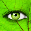 Green human eye with leaf - Ecology concept - Stock Photo