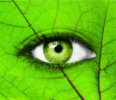 Green human eye with leaf - Ecology concept — Stok fotoğraf