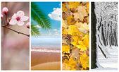 Fyra säsonger collage — Stockfoto