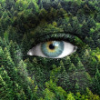 Green forest and human eyes - Save nature concept — Stock Photo #23472376