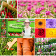 Gardening collage — Stock fotografie