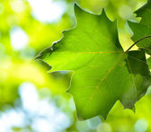 Fresh leaf against green background — Stock Photo