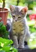 Cute kitten in garden — Stock Photo