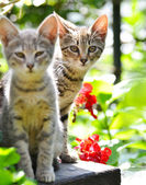 Cute kittens in garden — Stock Photo