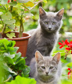 Cute kittens in garden — Stock Photo