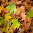 Autumn leaves background - Autumn concept — Foto de Stock