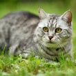 Beautiful fury cat portrait — Stockfoto
