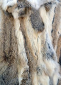 Zvířecí srst textura — Stock fotografie