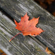 Autumn leaf on wooden bench at park — Stock Photo