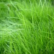 Grass Background With Vignette — Stock Photo