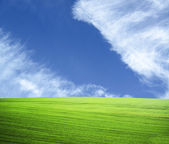 Beautiful green field and blue sky - natural landscape view — Stock Photo