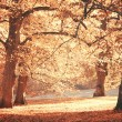 Dreamy image of beautiful Autumn forest — Stock Photo #34336313