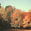 Dreamy image of beautiful Autumn forest — Stock Photo #34337057