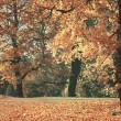 Dreamy image of beautiful Autumn forest — Stock Photo #34337787
